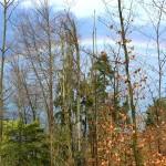 20150327_Regenbogen_Heinz_Zieri